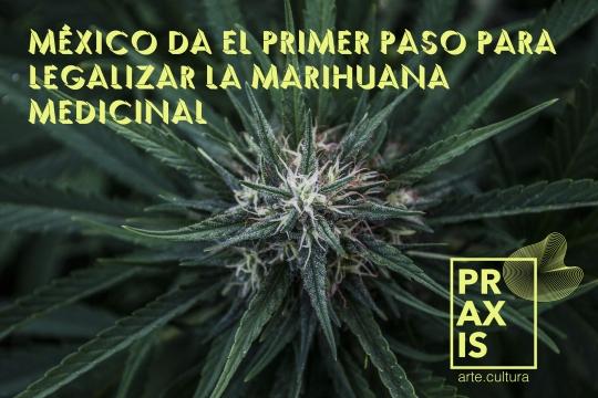 praxisjpg-weed