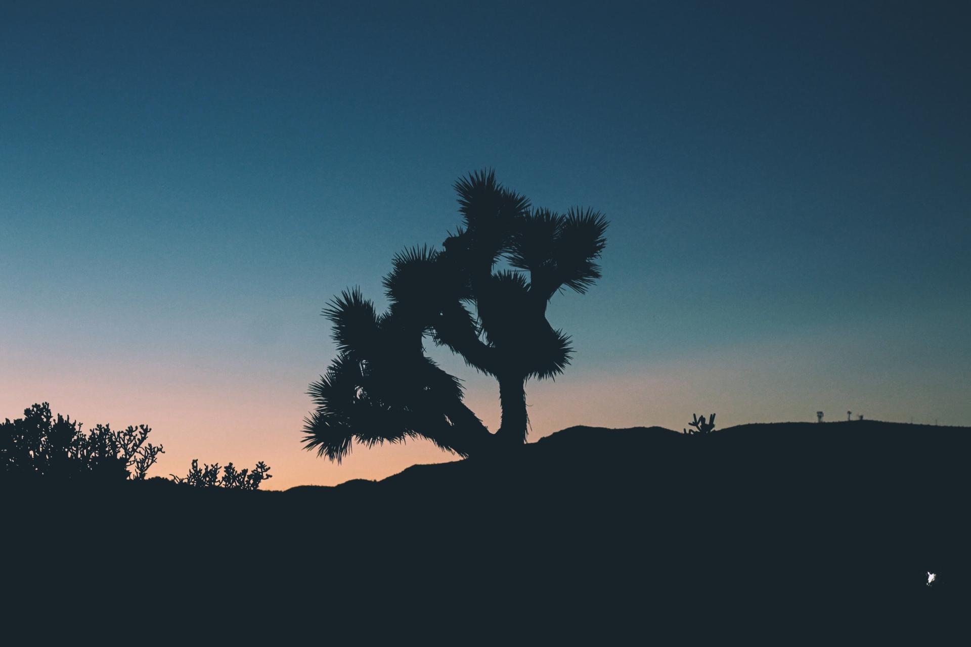 Desert Daze-18.jpg